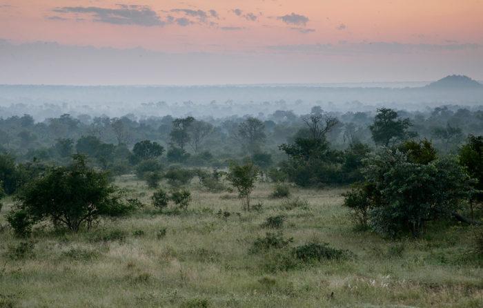 Londolozi-Game-Reserve-Panorama