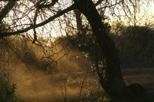 Dry, Dusty African Bushveld