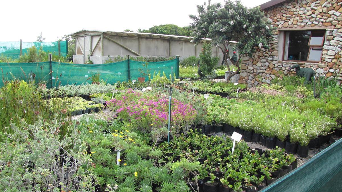 Fynbos Nursery