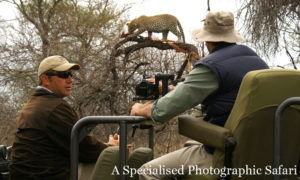 Ranger-Interpreting-Leopard