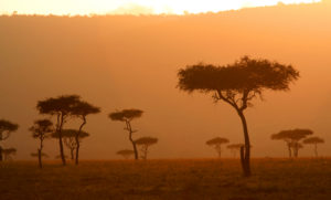 Bushveld landscape at sunset