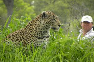 female_leopard_londolozi