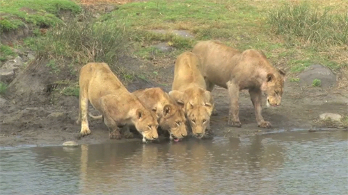Southern Pride Drinking