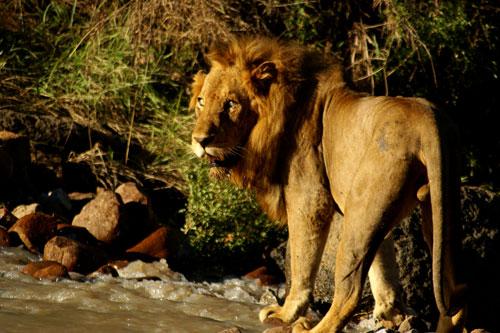 Majingilane Male Crossing Manyelethi River
