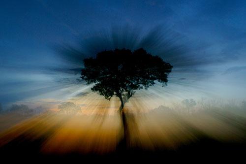 Sunset-Tree-Zoom-Rich-Laburn