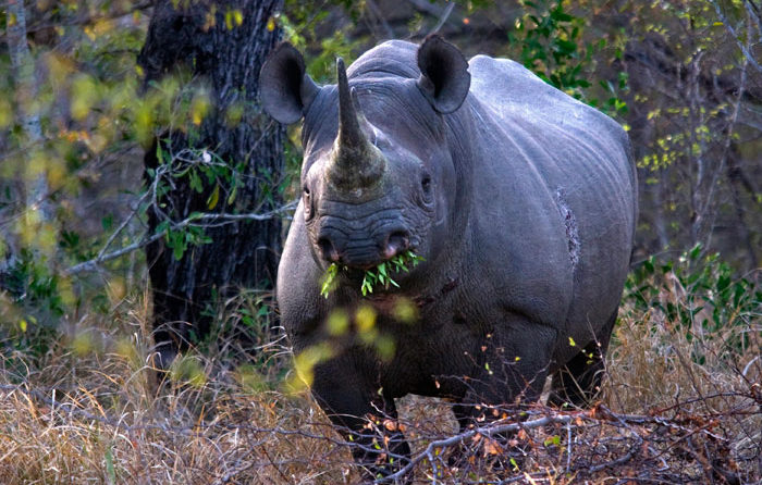 Black Rhino by Londolozi Guest, Dan