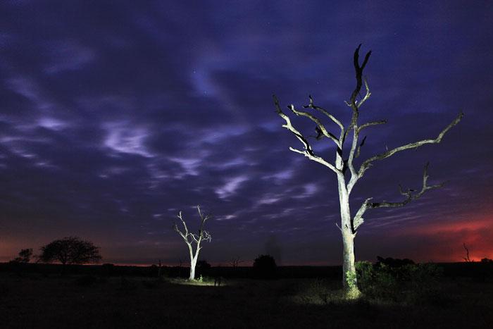 Leadwoods at Dusk by Rich Laburn