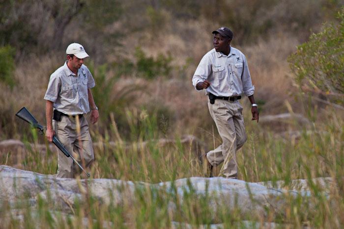 Adam Bannister and Solly Mhlongo tracking the Tsalala Pride - Rich Laburn