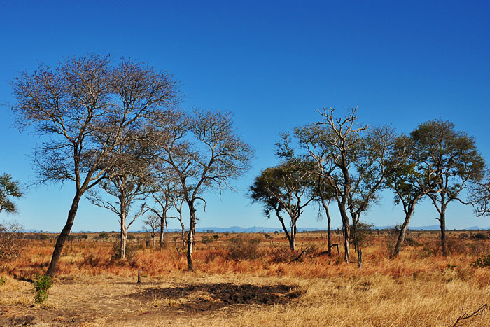 The Lowveld Escarpment from Winnis Wallow