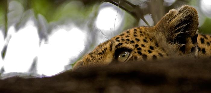 Nyaleti Young Female