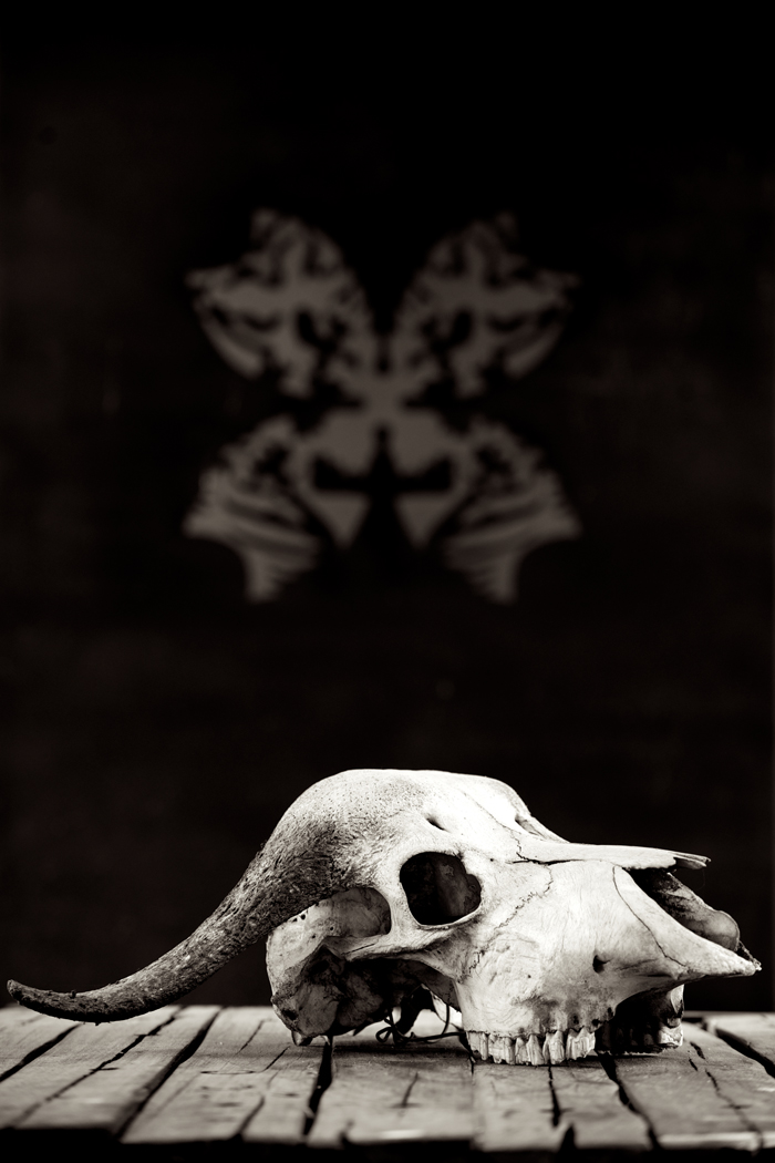 Skull and Logo
