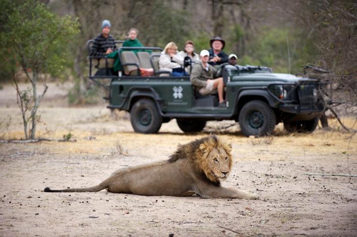 Watching one of the Majingilane Male Lions