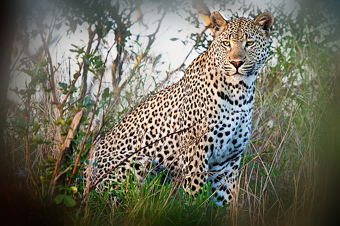 Maxabeni-Young-Male