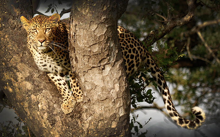 Vomba Young Female Marula - James Hobson