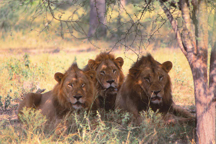 3 of the 5 new males by Chris Kane Berman