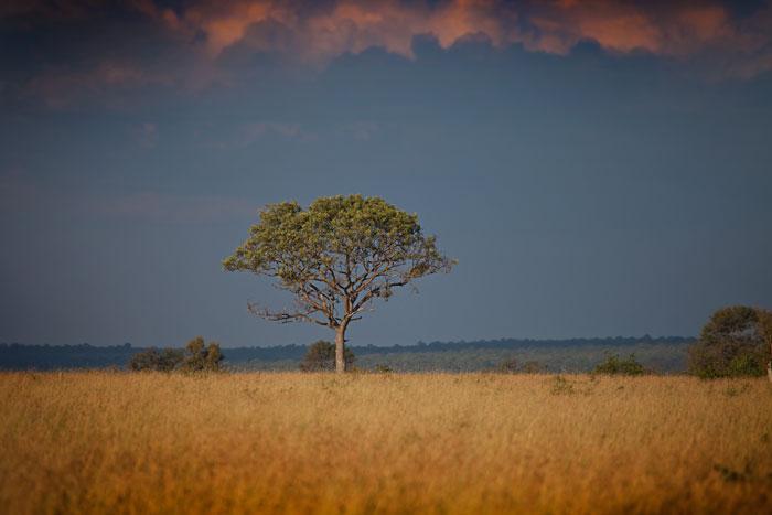 Marula Tree on  the Open Areas - Rich Laburn
