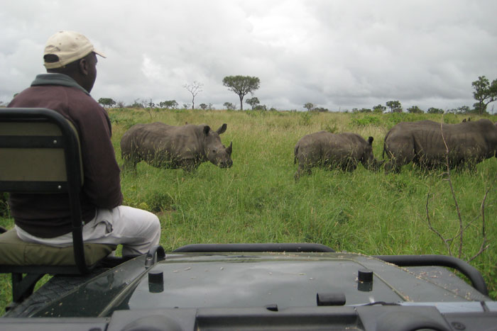 Robert watching a crash of rhino from the trackers seat - Sonja Waldl