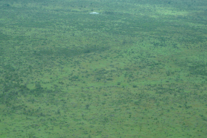 Flying into Londolozi, one can see how green the savannah gets in mid-summer - Sonja Waldl