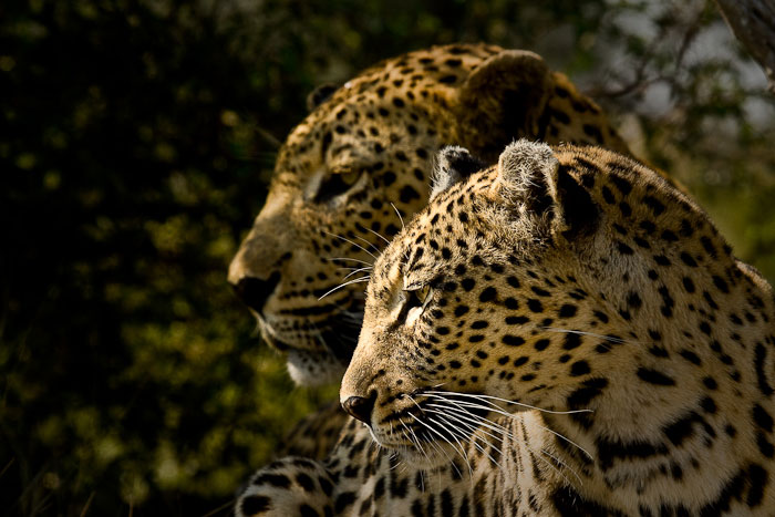 Camp Pan Male and Maxabeni Female by James Crookes