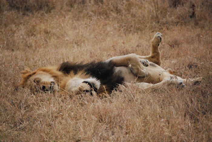 Sleeping Mapago brothers