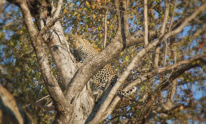 Peering through the branches of a tree on Ximpalapala Koppies