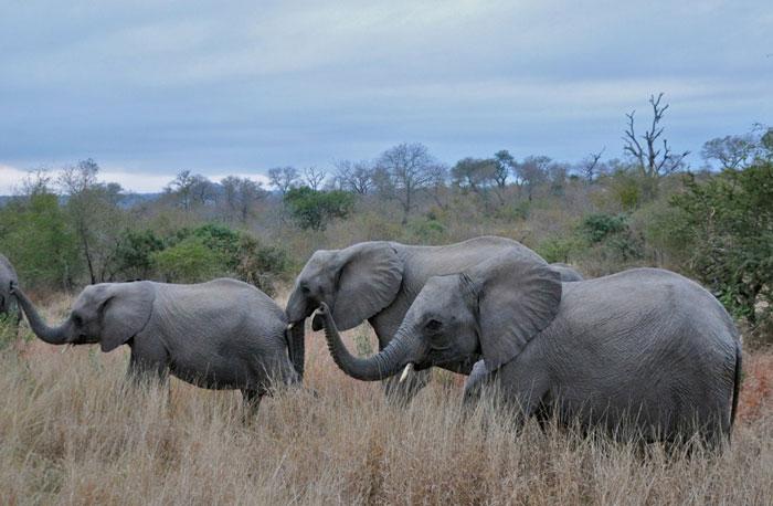 Close up of an elephant herd