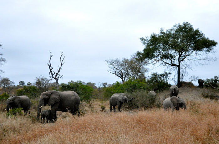 A herd of elephants in the late afternoon
