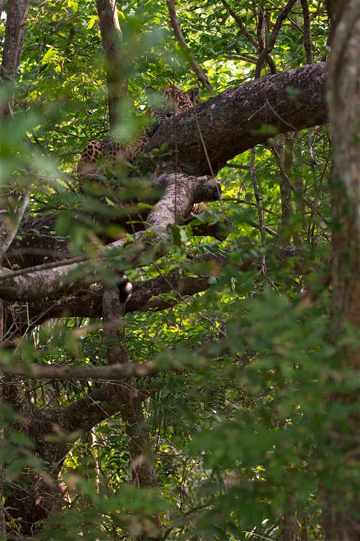 Esperanza hidden in a tree