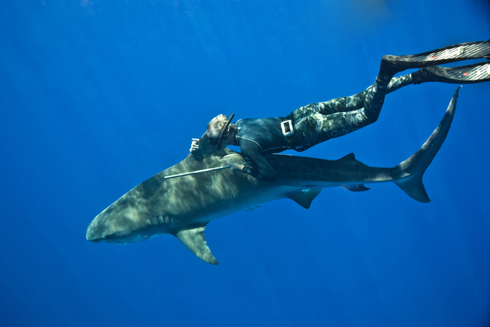 Neil was one of the first individuals to swim with and later ride a Tiger Shark