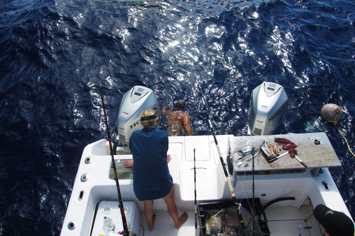 Once the Tiger Shark was free, Neil briefed us on how to behave in the water with the sharks.  Hanging a chain over the back of the boat, we pulled ourselves down it to escape the wash of the boat and clear up our field of view.