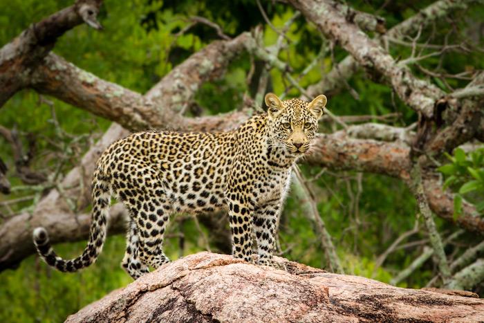 Ximpalampala cub