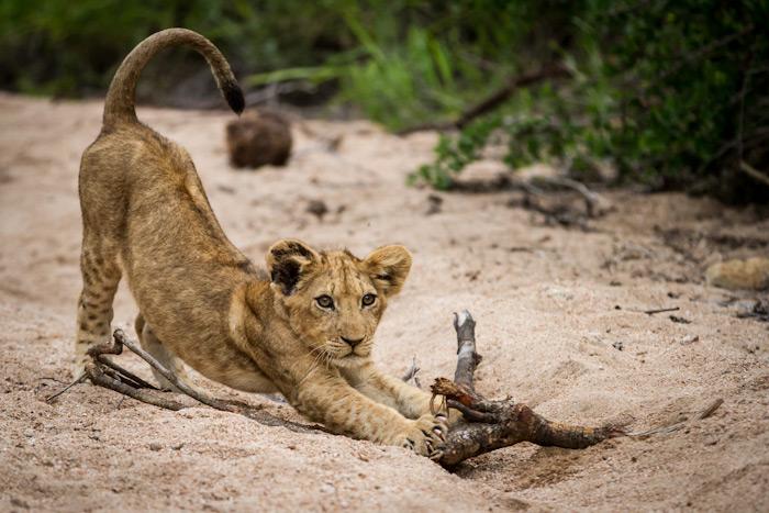 Sparta cub stretching