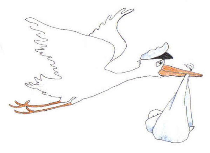 do white storks bring babies londolozi blog