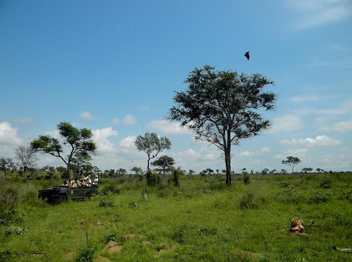 Vultures circling the cheetah's carcass