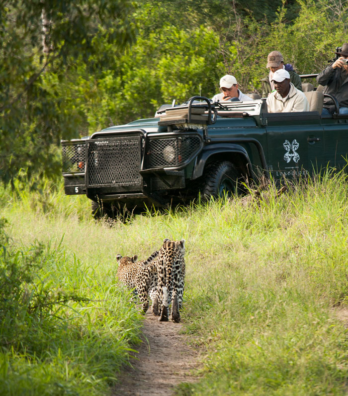 My last view of the Dudley Riverbank cub as she and her mother approach ranger Dan Buys and Tracker like Gumede.