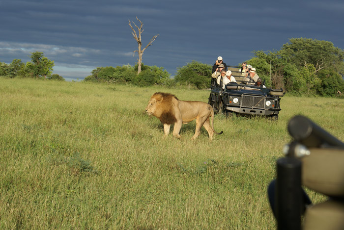 Having the corner of Bennets tracker seat in this shot gives us the perspective of how close the trackers can get to these animals. Here you can see the Hipscar Majingilane walking past Tom Imries vehicle