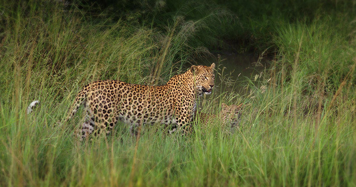 Mashaba and her cub photographed by Bennet