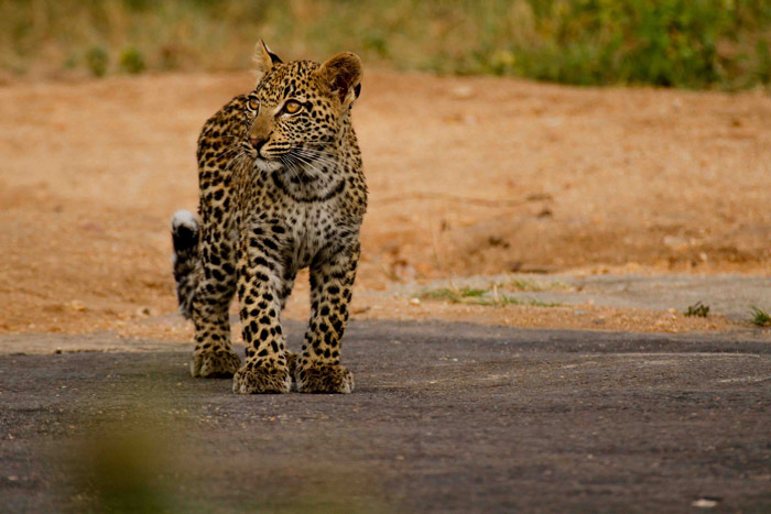 Mashaba Cub on the airstrip