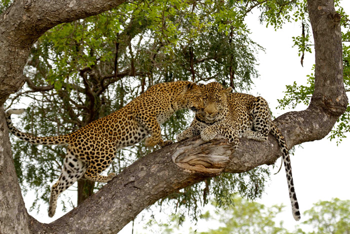 Marthly and Tutlwa In tree
