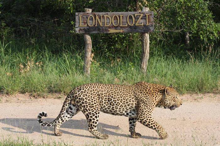 Londolozi, here I come!