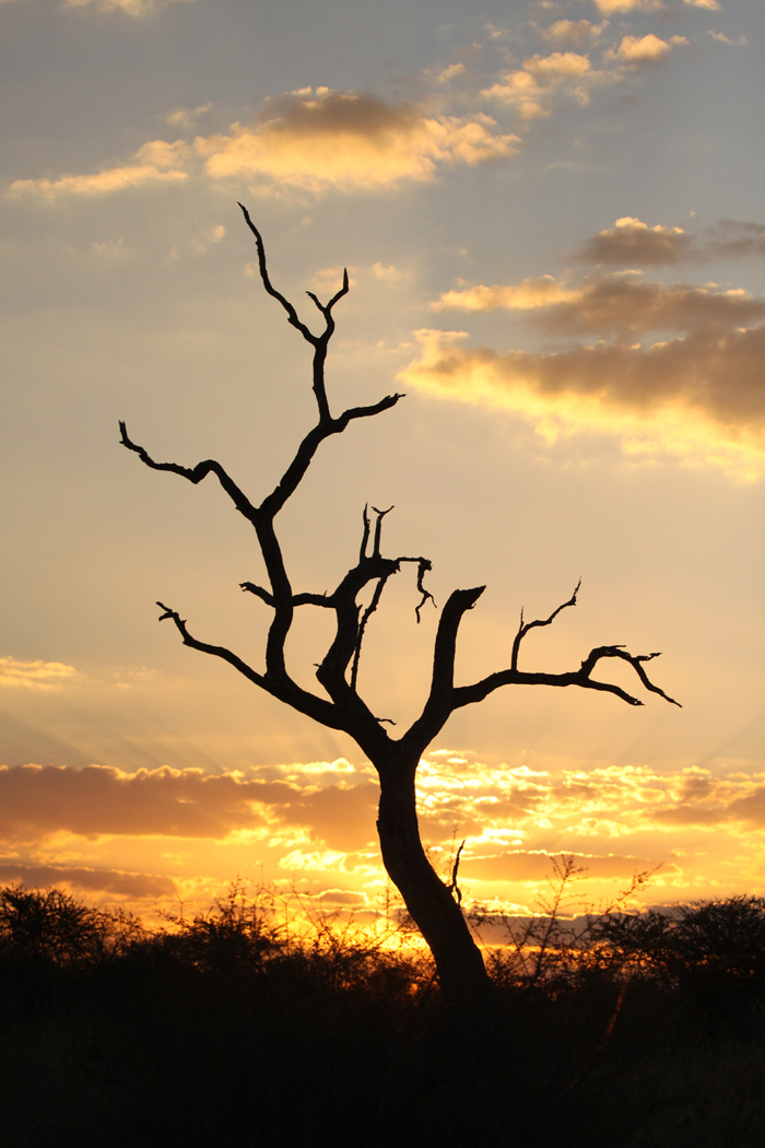 Beautiful sunset over the African bushveld. Canon 500d F8 1/4000 iso 200