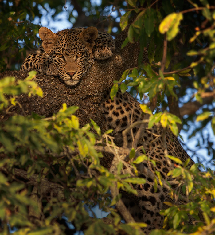 Mashaba Cub by Rich Laburn