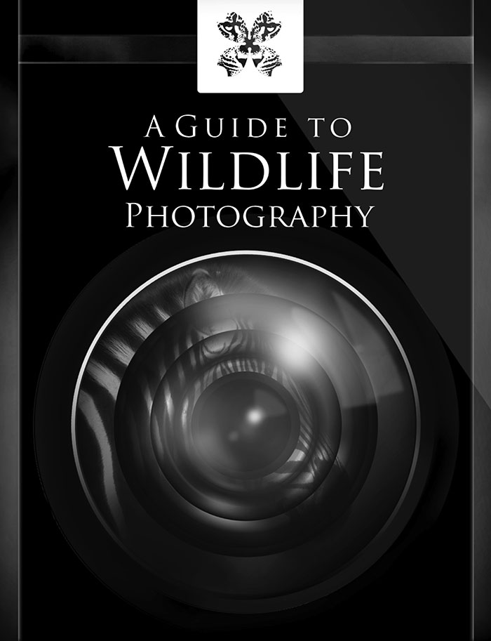 A Guide to Wildlife Photography - now available on the Apple iBookstore