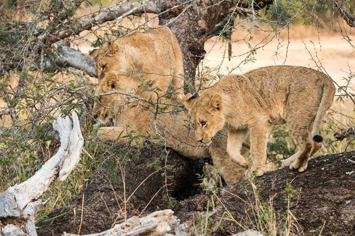 Sparta-cubs