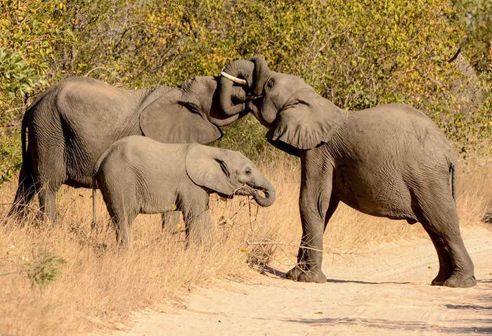 Elephant-embrace