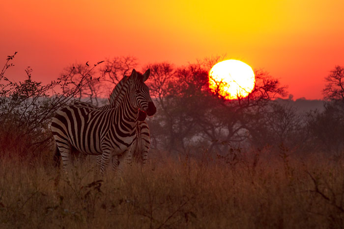 Sunrise over Circuit North as some Burchell's Zebra pause to listen to the distant alarm bark of a kudu.