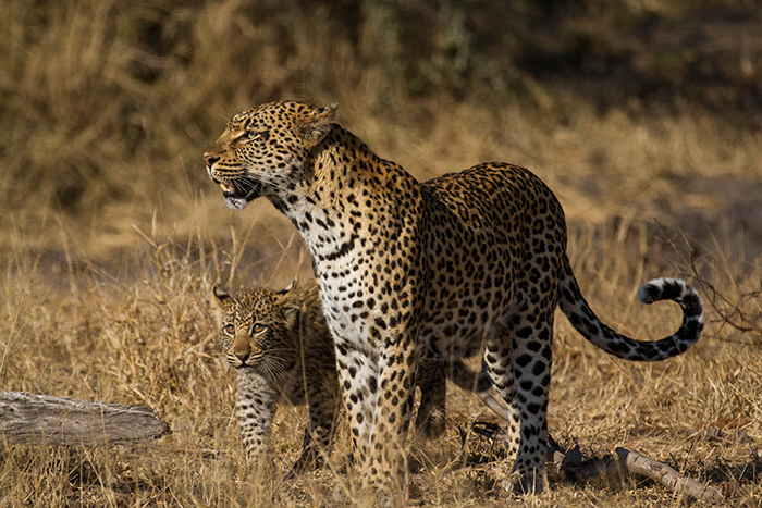 Always close to mom, watching her every move. Mike Sutherland