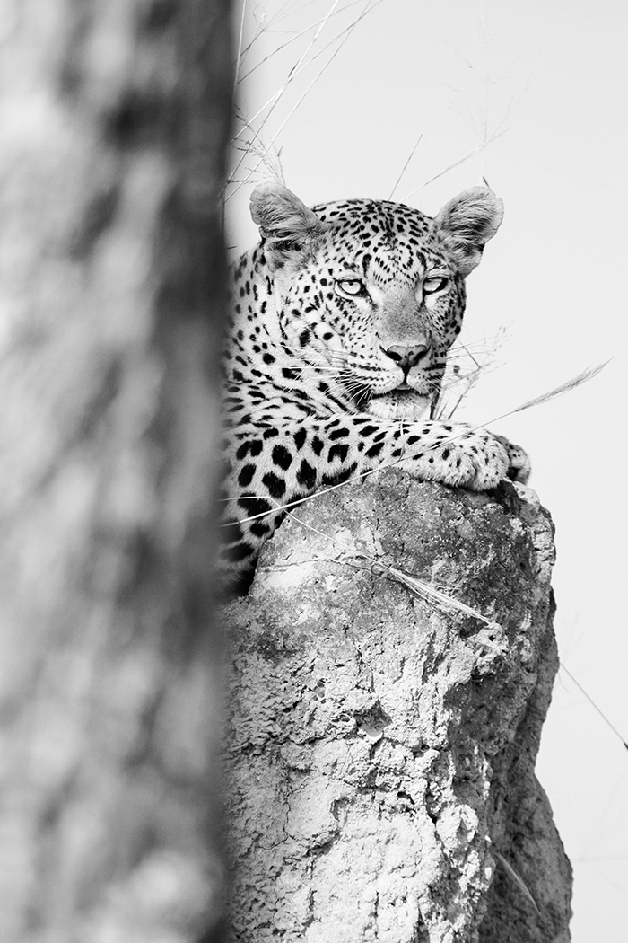 The Mashaba female poses for this interesting shot.