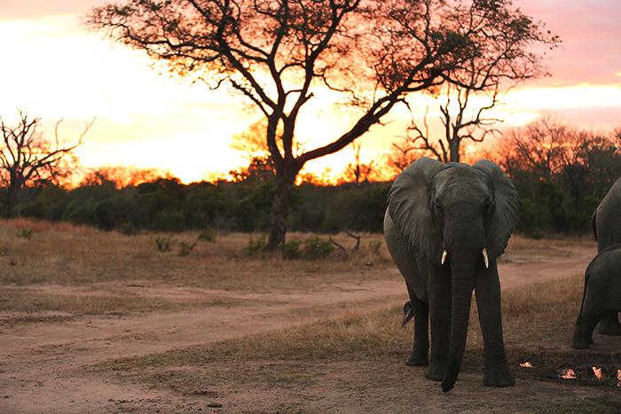 Elephant, sunset, enough said. Rich Burman.