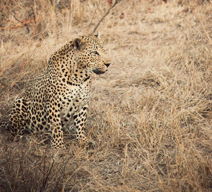 SafariAfternoons_31